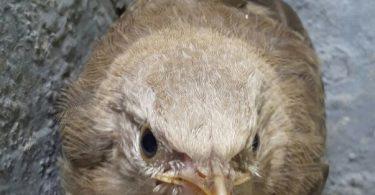 scared bird
