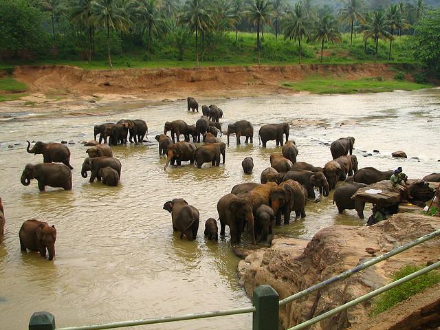elephant  orphanage in srilanka